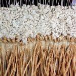 Comment reconnaître le coton ? composition chimique du coton