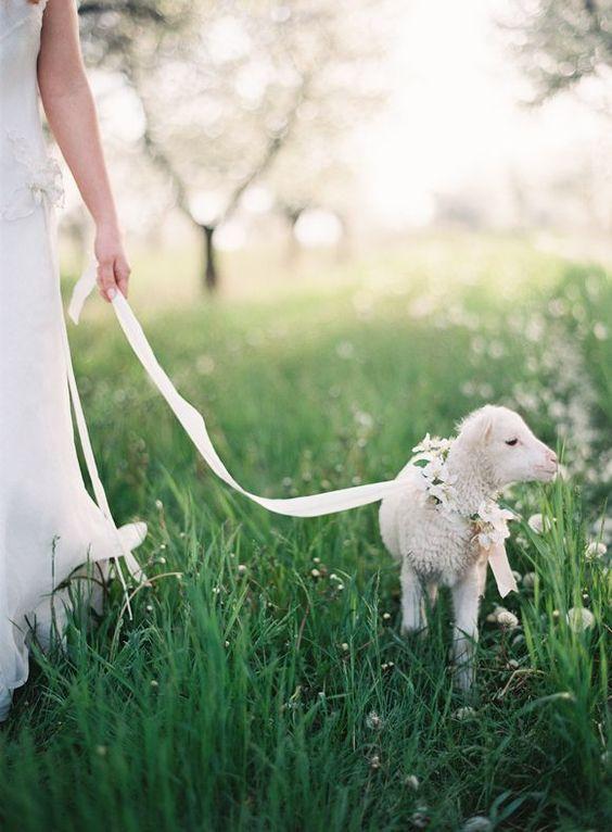Quel animal produit la plus belle qualite de laine cachemire